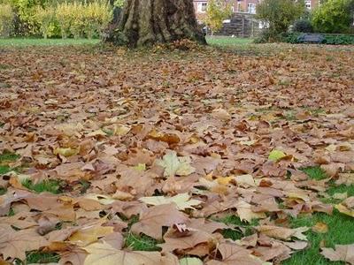 Corazones en red la par bola de las hojas secas for Arboles que no se le caen las hojas en invierno