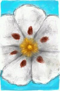 flor de la jara