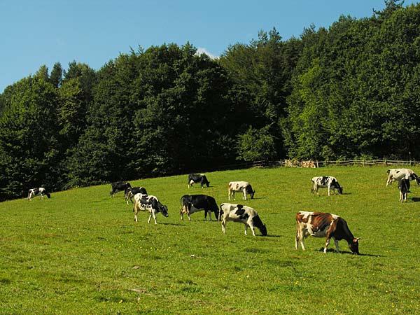 foto-vacas.jpg
